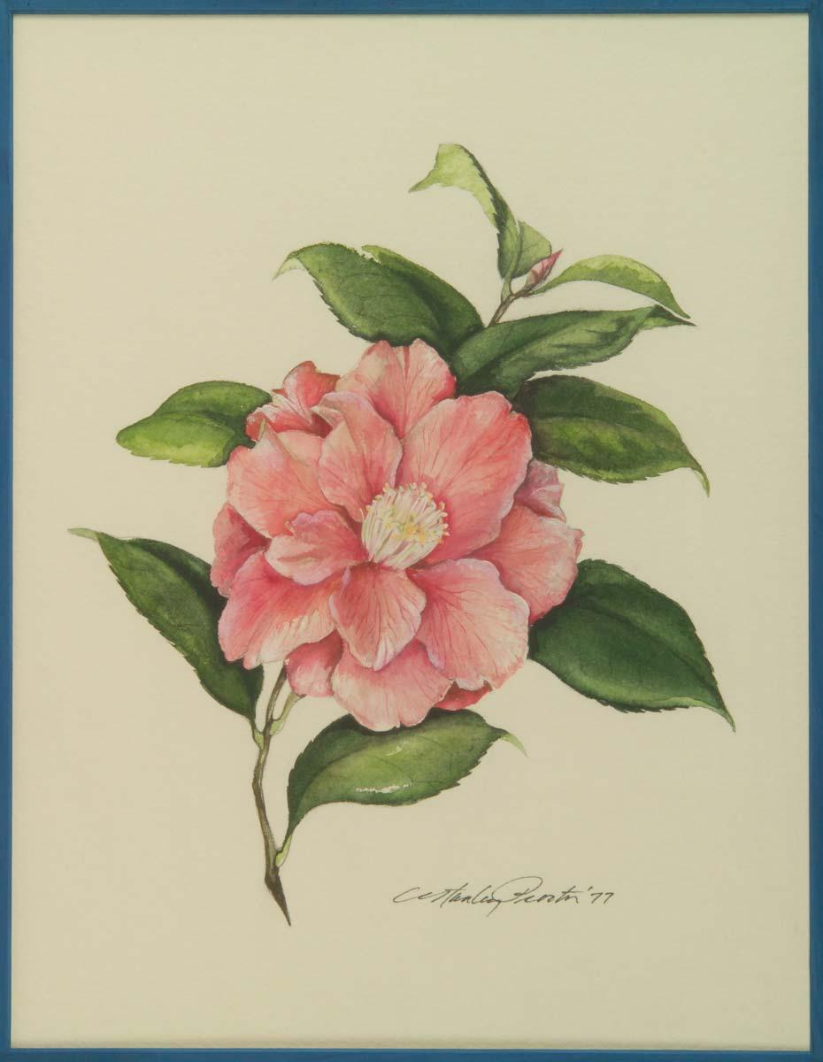 Camellia Flower Painting Camellia Flower Painting